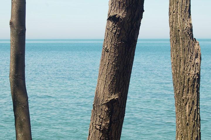 tree trunks, Niagara on the Lake, Ontario, Canada, May, 2013